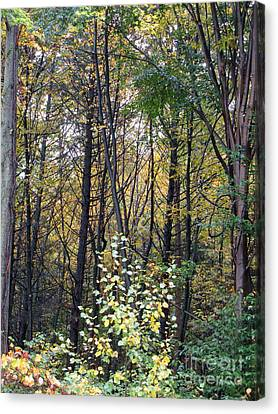 October Woods Canvas Print by Melissa Stoudt