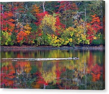 October's Colors Canvas Print by Dianne Cowen