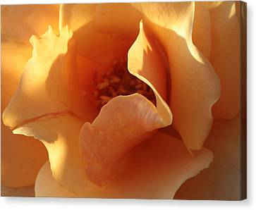 Shadows And Light Canvas Print - October's Rose  by Connie Handscomb
