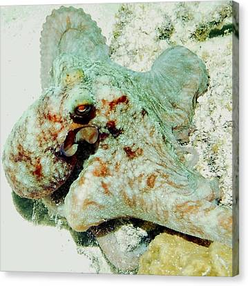 Octopus On The Reef Canvas Print