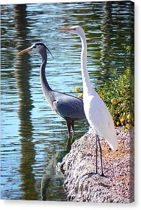 Canvas Print featuring the photograph Odd Couple by Deb Halloran