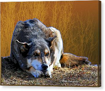 Ode To An Old Dog Canvas Print by Renee Forth-Fukumoto
