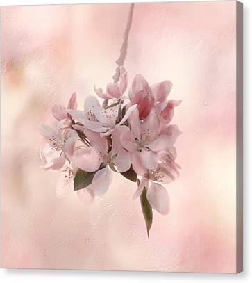 Ode To Spring Canvas Print by Kim Hojnacki