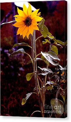 Ode To Sunflowers Canvas Print by Patricia Keller