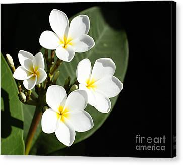 Of Scent And Beauty Canvas Print