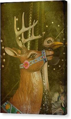 Oh My Deer Canvas Print by Jan Amiss Photography