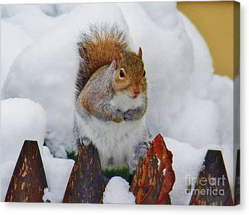 Oh No   Early Snow Canvas Print by Judy Via-Wolff