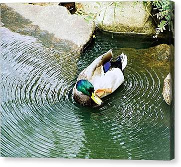 Oh To Be A Duck Canvas Print