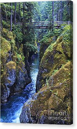 Ohanapecosh River Canvas Print by Mark Kiver