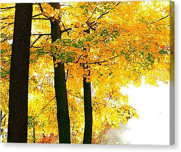 Ohio Autumn Canvas Print