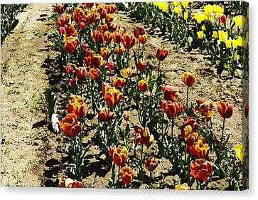 India Canvas Print - Oil Painting - Red And Yellow Tulips Inside The Tulip Garden In Srinagar by Ashish Agarwal