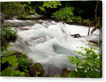 Oirase Stream Canvas Print