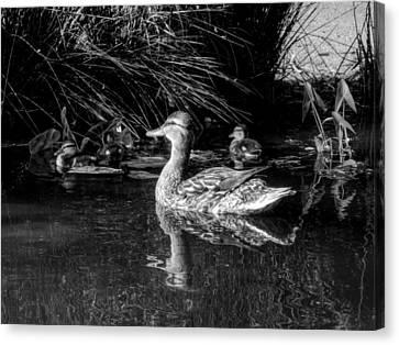 Okc Ducks 002 Canvas Print
