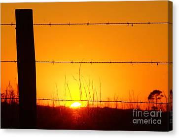 Okeechobee Farm Sunset Canvas Print by Lynda Dawson-Youngclaus