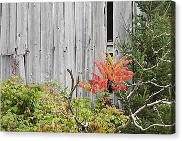 Maine Barns Canvas Print - Old Barn In Fall by Keith Webber Jr