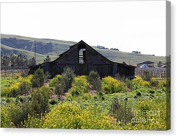 Old Barn In Sonoma California 5d22235 Canvas Print by Wingsdomain Art and Photography