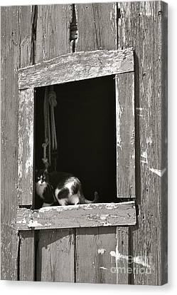 Old Barn Window Canvas Print by Tim Good