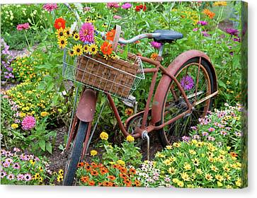 Old Bicycle With Flower Basket Canvas Print