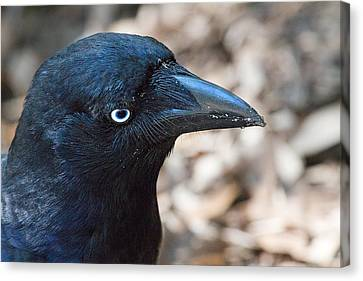 Portrait Canvas Print - Old Blue Eyes The Raven by Mr Bennett Kent