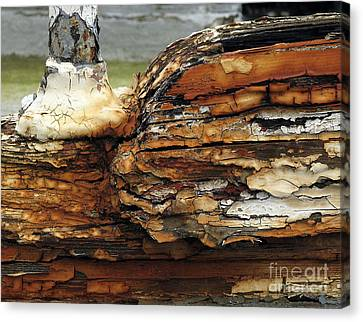 Canvas Print featuring the photograph Old Boat by Inge Riis McDonald