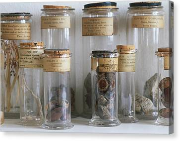 Old Botanical Specimen Jars Canvas Print