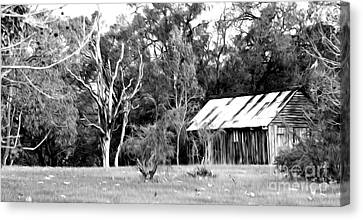 Old Bush Shed Canvas Print by Phill Petrovic