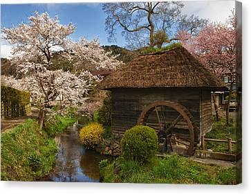 Spring Time Canvas Print - Old Cherry Blossom Water Mill by Sebastian Musial