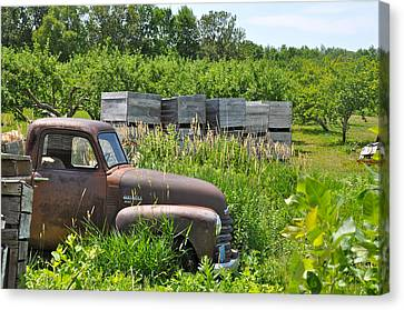 Old Chevy Pickup In Orchard Canvas Print by Jeremy Evensen