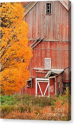 Old Dilapidated Country Barn During Autumn. Canvas Print
