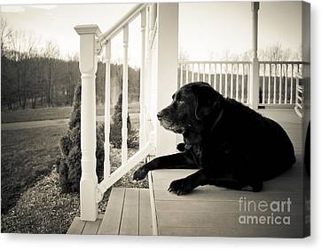 Porch Canvas Print - Old Dog On A Front Porch by Diane Diederich