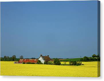 Old Farm Surrounded In Oilseed Rape Canvas Print by Panoramic Images