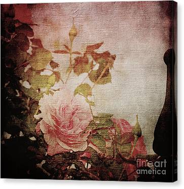 Old Fashion Rose Canvas Print