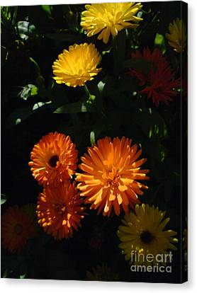 Canvas Print featuring the photograph Old-fashioned Marigolds by Martin Howard