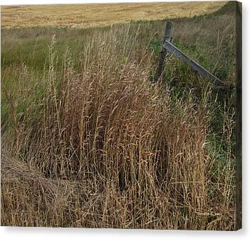 Old Fence Line Canvas Print by Donald S Hall