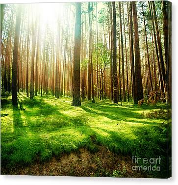 Canvas Print featuring the photograph Old Forest by Boon Mee
