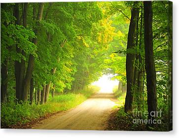 Old Forest Road In Autumn Canvas Print by Terri Gostola