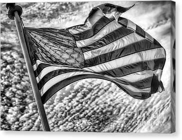 Old Glory Canvas Print by Jack Torcello