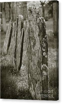 Old Gravestones I Canvas Print by Dave Gordon