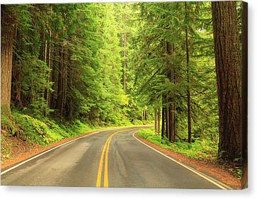 Old Growth Forest At Grove Canvas Print by Stuart Westmorland