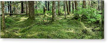 Old Growth Forest, Tongass National Canvas Print by Panoramic Images