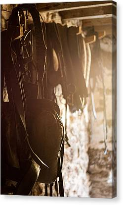 Old Harness Canvas Print