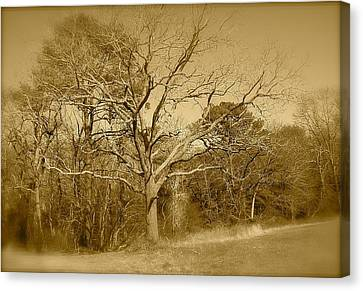 Old Haunted Tree In Sepia Canvas Print by Amazing Photographs AKA Christian Wilson