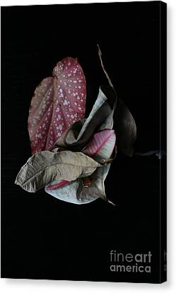 Old Leaves. Canvas Print by Tanya Polevaya