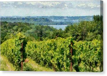 Old Mission Peninsula Vineyard Canvas Print by Michelle Calkins