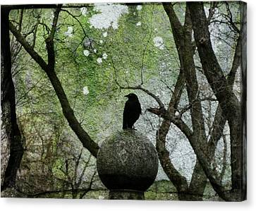 Old Moss Canvas Print