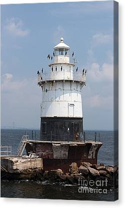 Phalacrocorax Auritus Canvas Print - Old Orchard Shoal Light I by Clarence Holmes