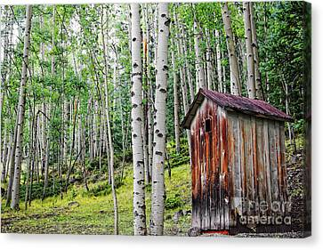 Old Outhouse Among Aspens Canvas Print by Lincoln Rogers