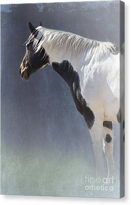 Old Paint Canvas Print by Betty LaRue