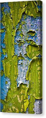 Old Paint Canvas Print by Frank Tschakert