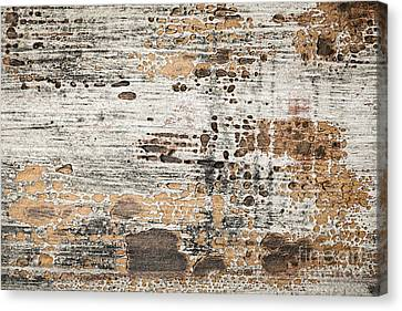 Old Painted Wood Abstract No.1 Canvas Print